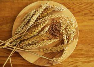 Weizen - Ähren, Körner und Spelzen